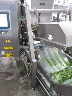 Broccoli sorting machine