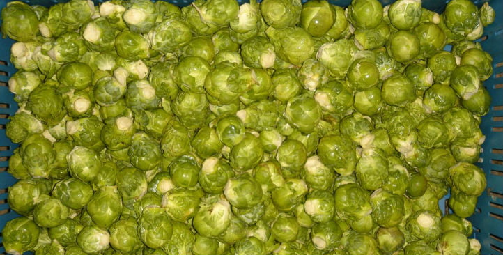 Brussels sprout sorting