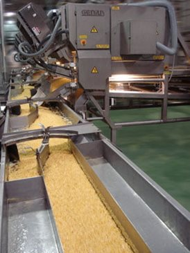 Corn sorting machine