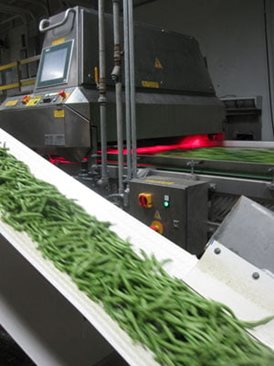 Green bean sorting machine